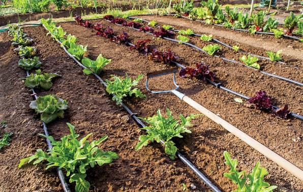 irrigazione a goccia come funziona e attrezzatura necessaria