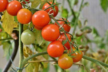 Quali piante coltivare sul balcone consigli utili e idee